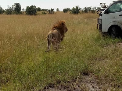 Kenya Safaris Holidays and Tours – East Africa packages